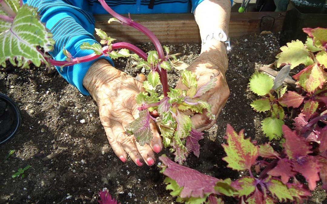Life's a garden….DIG IT!